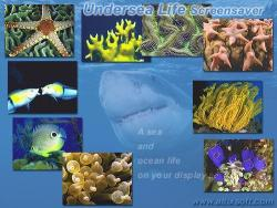 Undersea Life Screensaver